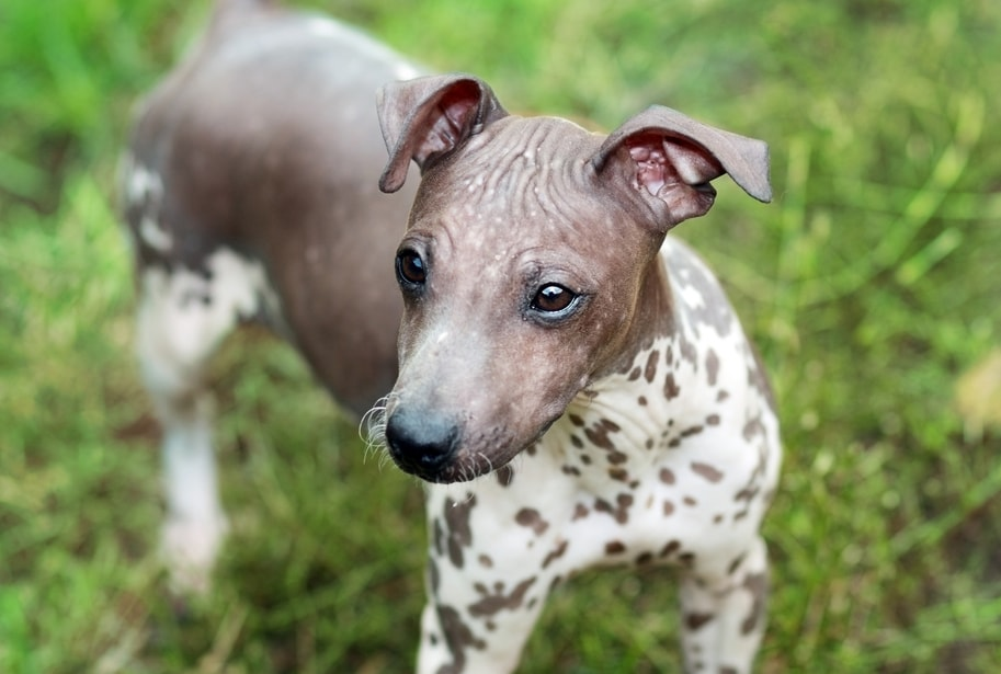 Clean Dog Breeds PetMD