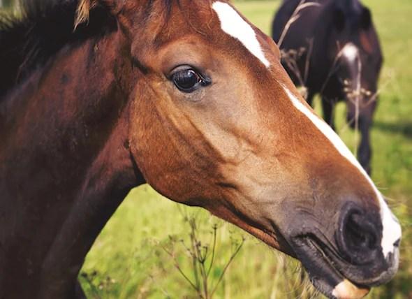 Heat Stroke in Horses  petMD