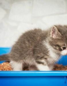 Parasitic diarrhea giardiasis in cats also petmd rh