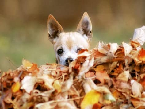 Fall Leaves Computer Wallpaper Top 10 Holistic Tips For Managing Your Pet S Fall