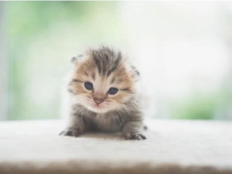 kitten development understanding a