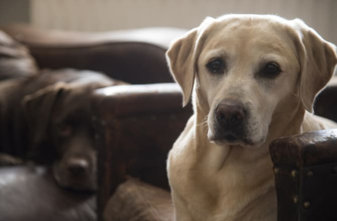 5 Types of Liver Disease in Dogs  petMD