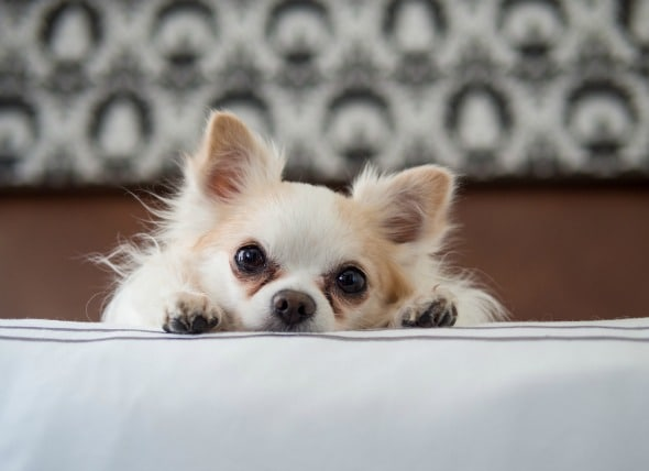 Vitamin D Poisoning in Dogs  petMD