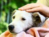Protecting Pets Against Wild Animals And Treating Wounds Petmd