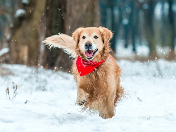 5 Ways To Keep Your Dog Active This Winter PetMD