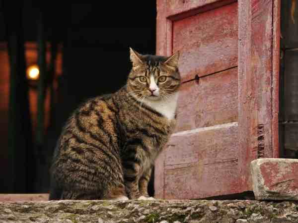 Katze sitzt in offener Türe