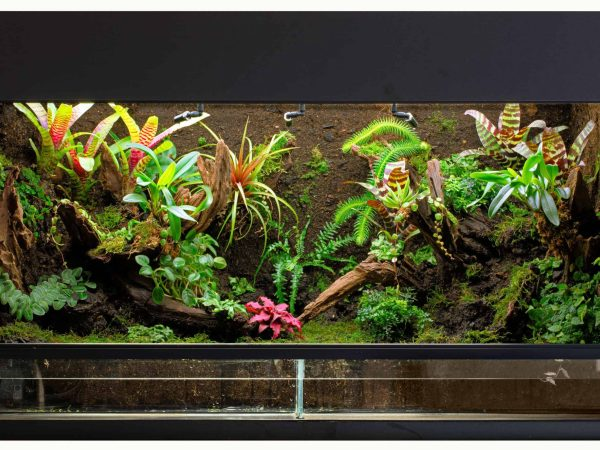 tropical rain forest terrarium or paludarium for rainforest animals like poison dart or tree frogs.