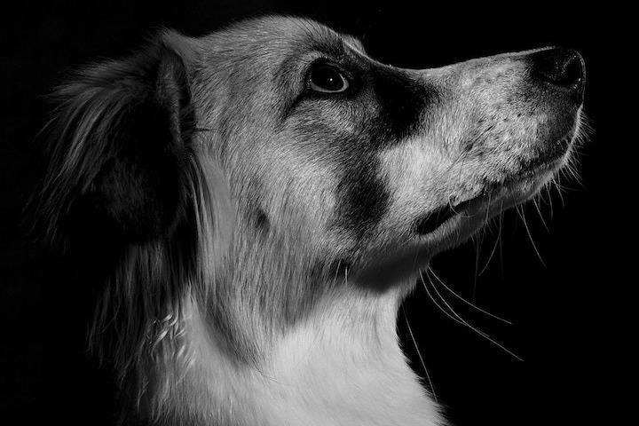 getreidefreies Hundefutter-4