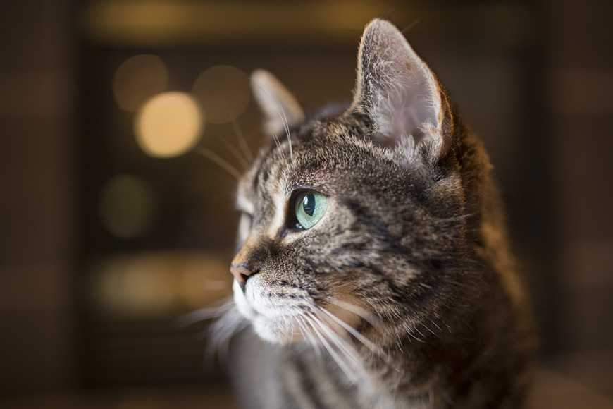 Seven Most Common Illnesses in Senior Cats-5