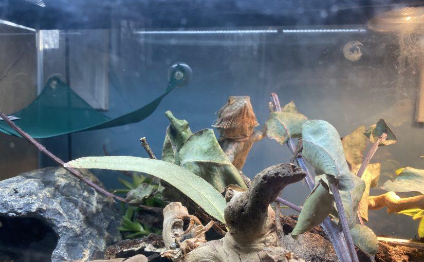 BioActive Terrarium!