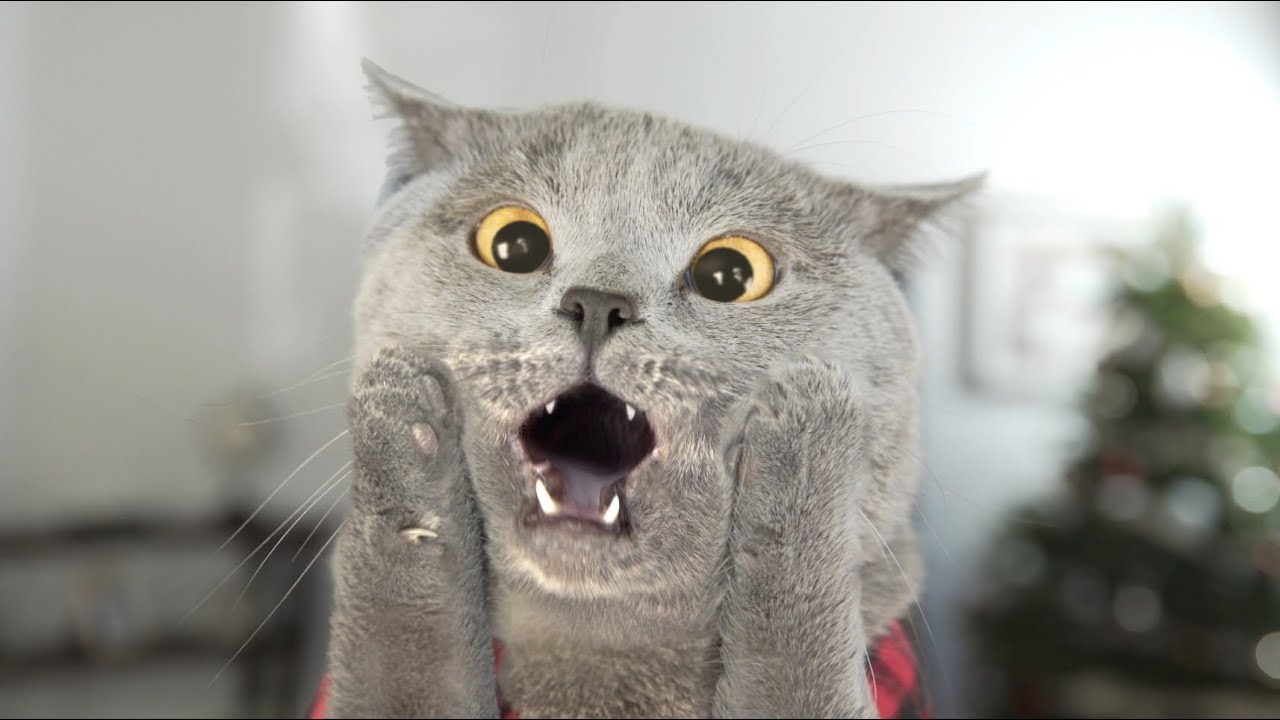 Very Cute Baby Laughing Wallpaper Download Feeding Your Cat All The Things You Want To Know Pet Needs