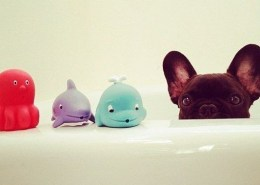 baths help heal itchy dogs