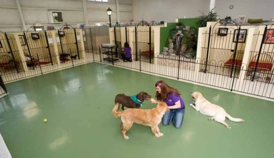 Dog Boarding Services  Dog Boarding Facilities  Pet Palace