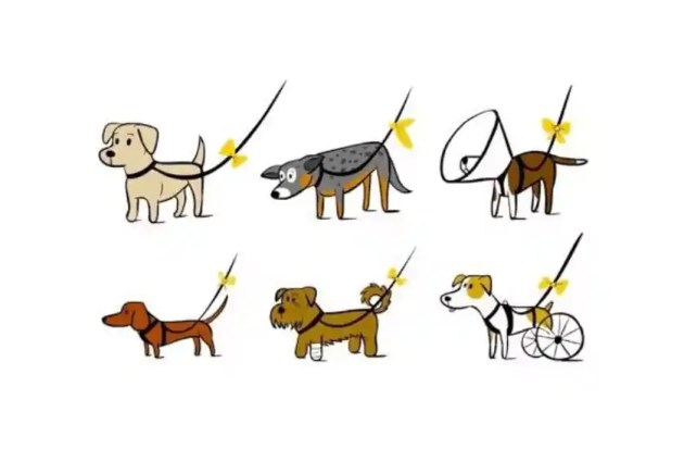 Sárga szalag kutyán
