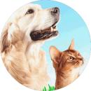 Kutya-cica biztosítás