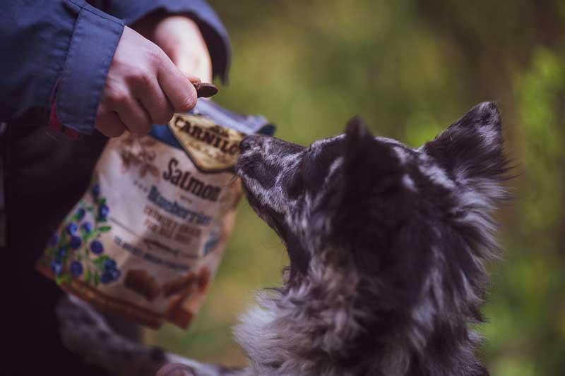 Carnilove jutalomfalat kutyáknak