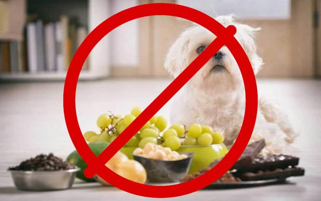 7 tiltott zöldség és gyümölcs kutyáknak