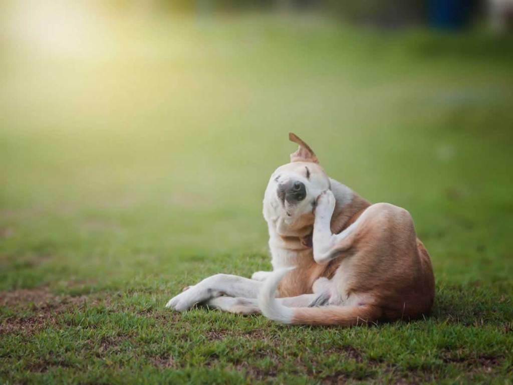 Kutya szőrhullás
