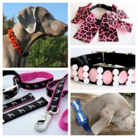 The 10 Coolest Dog Accessories You Should Have - Pet Paw