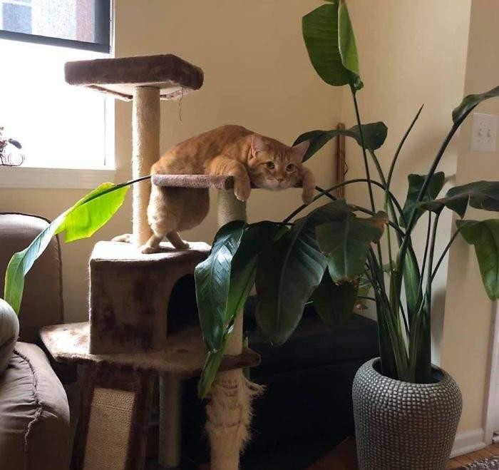喵星人的世界你別想懂~ 32張飼主發現「我養的貓有點不對勁」的傻眼瞬間 - 寵物星人的秘密基地
