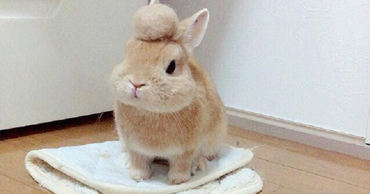 小兔子意外適合變身日本飆車族?「兔兔爆萌飛機頭」讓網友激動到心跳直接漏一拍! - 寵物星人的秘密基地