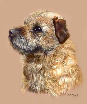 Dog Portraits Border Terrier Quake Painting By Isabel
