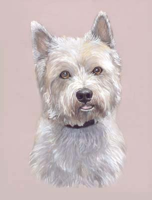 Dog Portraits West Highland White Terrier Painting Code