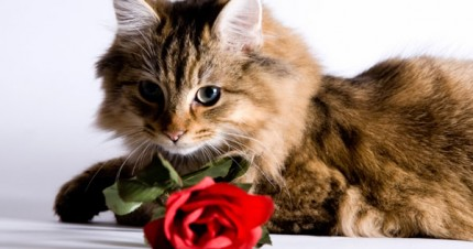 Cute Dog And Kitten Wallpaper Pamper Your Cat This Valentine S Day