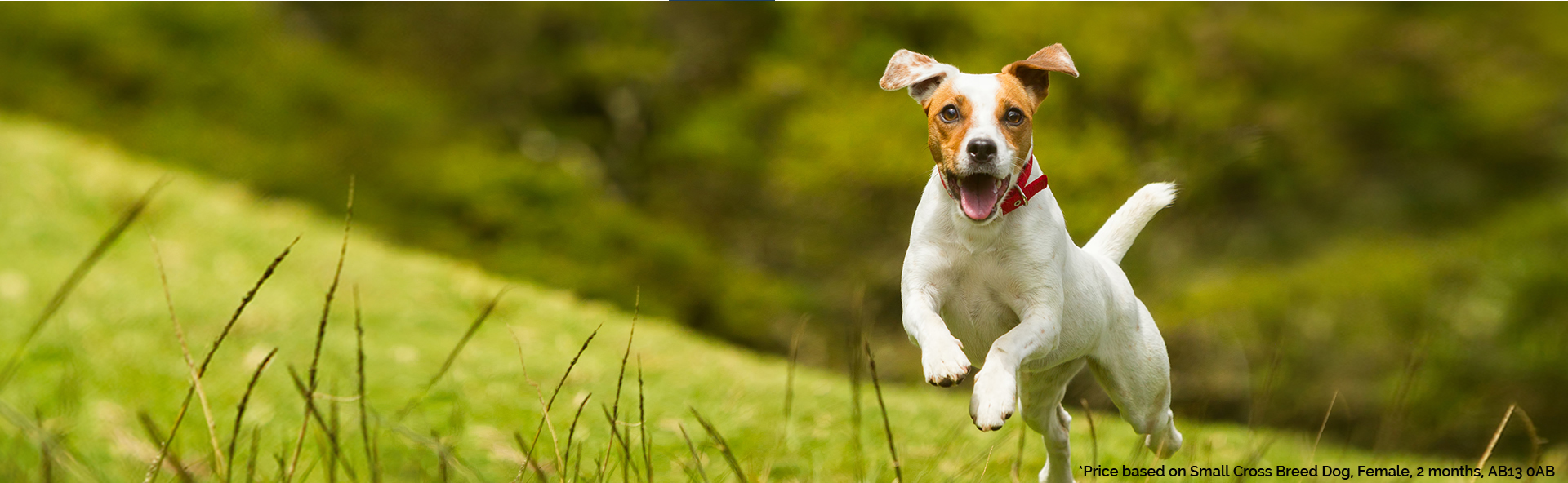 affordable pet insurance for