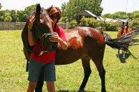 Equine Therapy: Neck Stretches