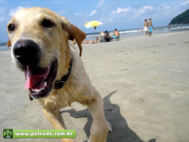 cachorro-praia-areia-ferias-verao-viagem-petrede