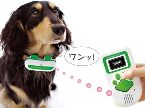 """Gadget traduz o que seu cachorro """"diz"""""""