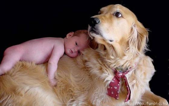 Animal de estimação x Bebê