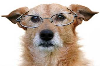 Dicionário Canino