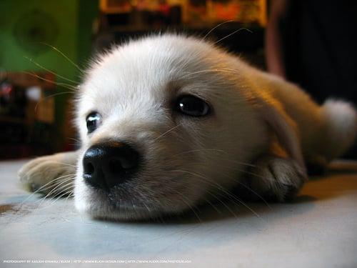 7 dicas arrasadoras de receitas caseiras para tratar seu cachorro