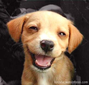 7 lições infalíveis de como educar um cachorro para ser feliz e obediente