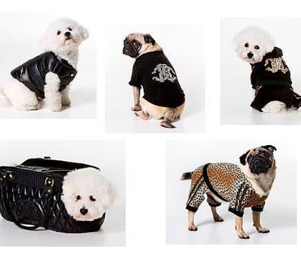Italiano Roberto Cavalli agora faz roupa de luxo para cachorro