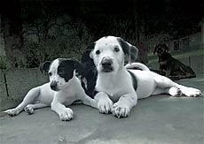 Oito motivos para adotar um cachorro vira-lata
