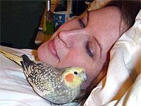 Pássaros de estimação