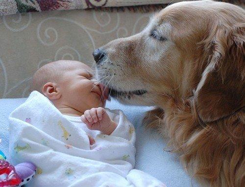 Animais de estimação para crianças