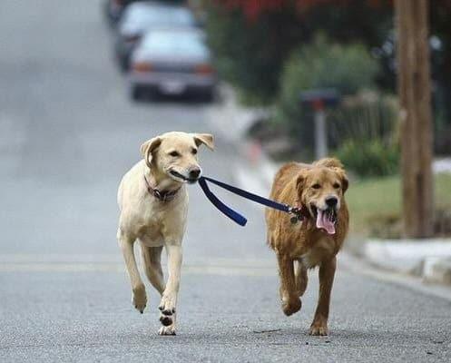 Cães de trabalho: quem são eles?