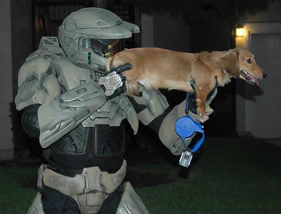 cachorro-arma-halo-dog