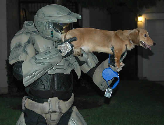 Não faça do seu cachorro uma arma, a vítima pode ser você!