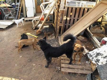 cachorros-abandonados