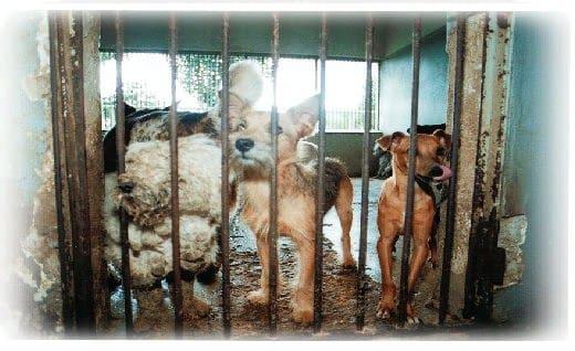 Falsa carrocinha tenta capturar animais em Manaus