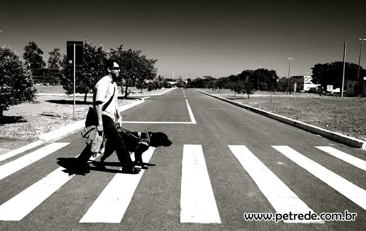 País prepara regulamentação de cães-guia para cegos