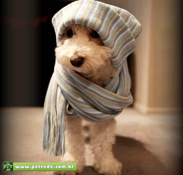 cachorro-poodle-frio-agasalho-inverno-petrede