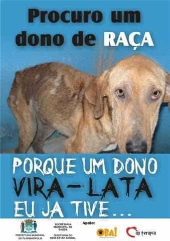 dono-vira-lata