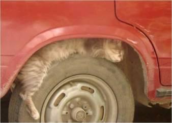 pet-rede-gato-dormindo-08