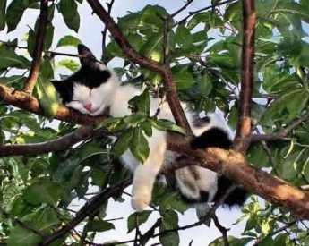 pet-rede-gato-dormindo-09